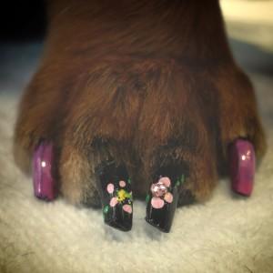 Lo smalto a fiori sulle zampe del cane